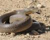 ular melingkar