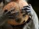 mengupas-kelapa